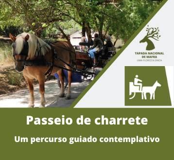 TAPADA NACIONAL DE MAFRA | PASSEIO DE CHARRETE